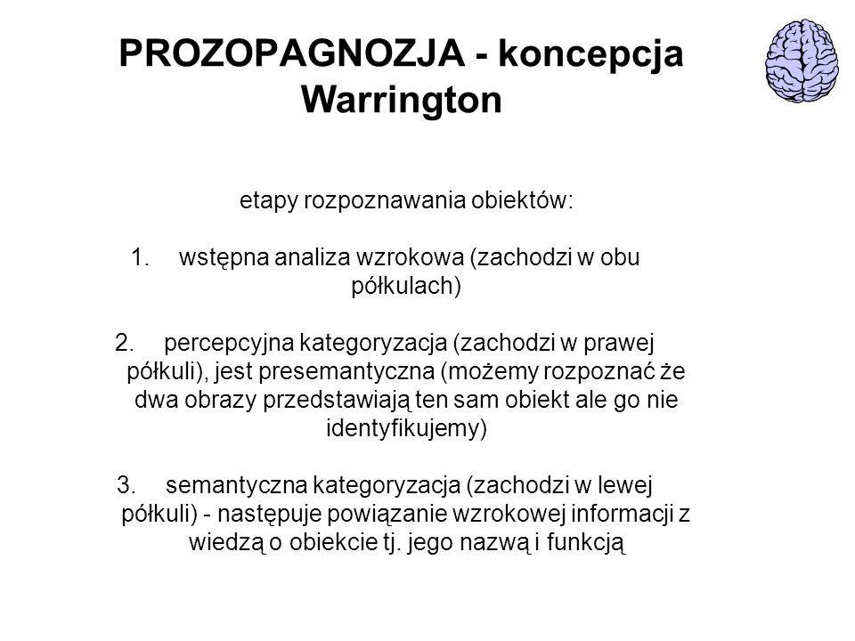 PROZOPAGNOZJA - koncepcja Warrington etapy rozpoznawania obiektów: 1. wstępna analiza wzrokowa (zachodzi w obu półkulach) 2. percepcyjna kategoryzacja