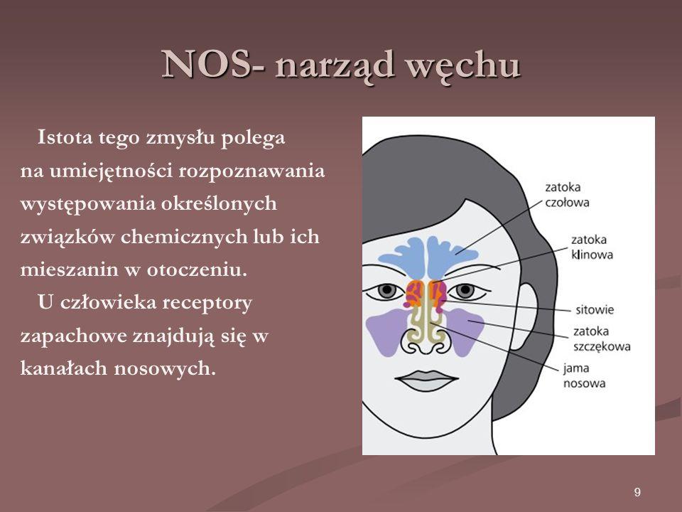 9 NOS- narząd węchu Istota tego zmysłu polega na umiejętności rozpoznawania występowania określonych związków chemicznych lub ich mieszanin w otoczeniu.