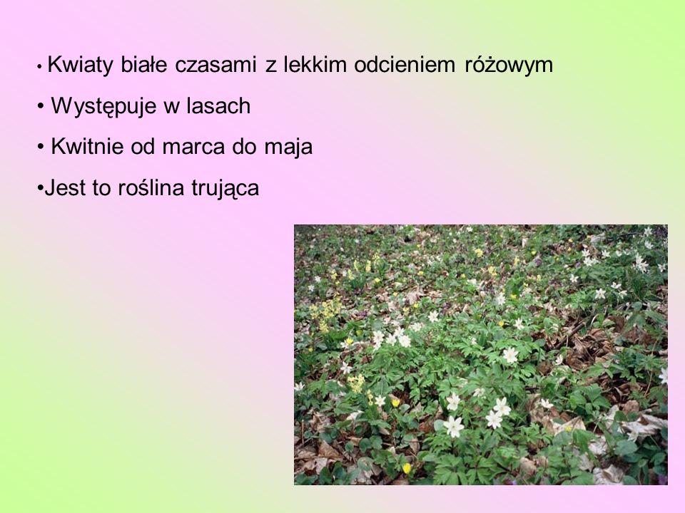 Kwiaty białe czasami z lekkim odcieniem różowym Występuje w lasach Kwitnie od marca do maja Jest to roślina trująca