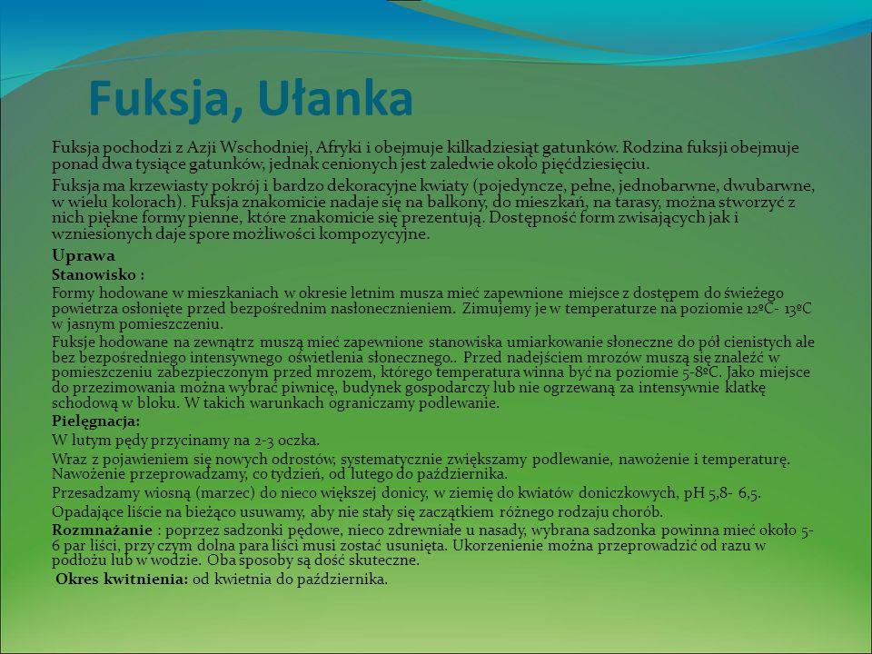Fuksja, Ułanka Fuksja pochodzi z Azji Wschodniej, Afryki i obejmuje kilkadziesiąt gatunków.