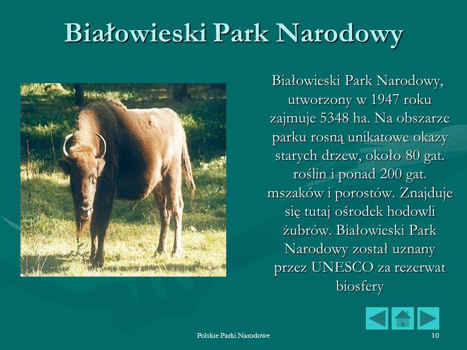 Polskie Parki Narodowe10 Białowieski Park Narodowy Białowieski Park Narodowy, utworzony w 1947 roku zajmuje 5348 ha. Na obszarze parku rosną unikatowe