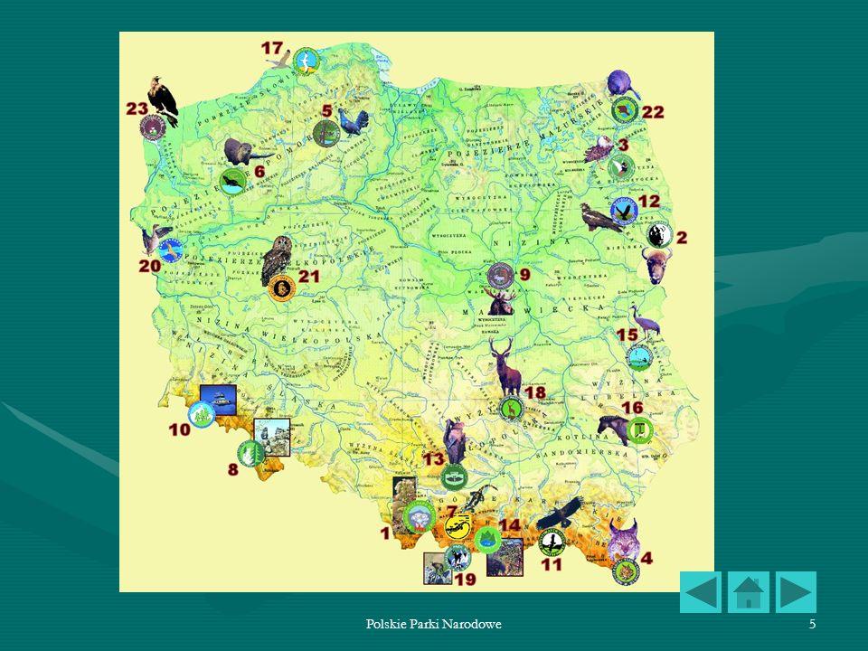 Polskie Parki Narodowe56 Wigierski Park Narodowy Wigierski Park Narodowy znajduje się w północno-wschodniej Polsce, na terenie województwa podlaskiego, w krainie Mazursko-Podlaskiej, w północno-wschodniej części dzielnicy Pojezierza Mazurskiego i północnej dzielnicy Puszczy Augustowskiej.