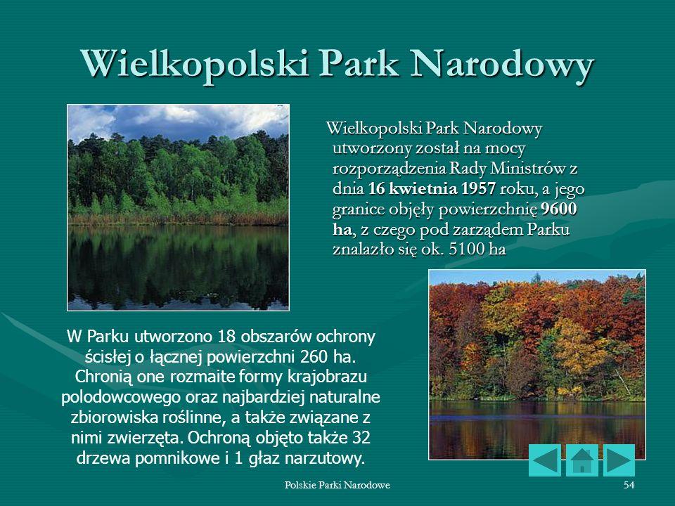 Polskie Parki Narodowe54 Wielkopolski Park Narodowy Wielkopolski Park Narodowy utworzony został na mocy rozporządzenia Rady Ministrów z dnia 16 kwietn