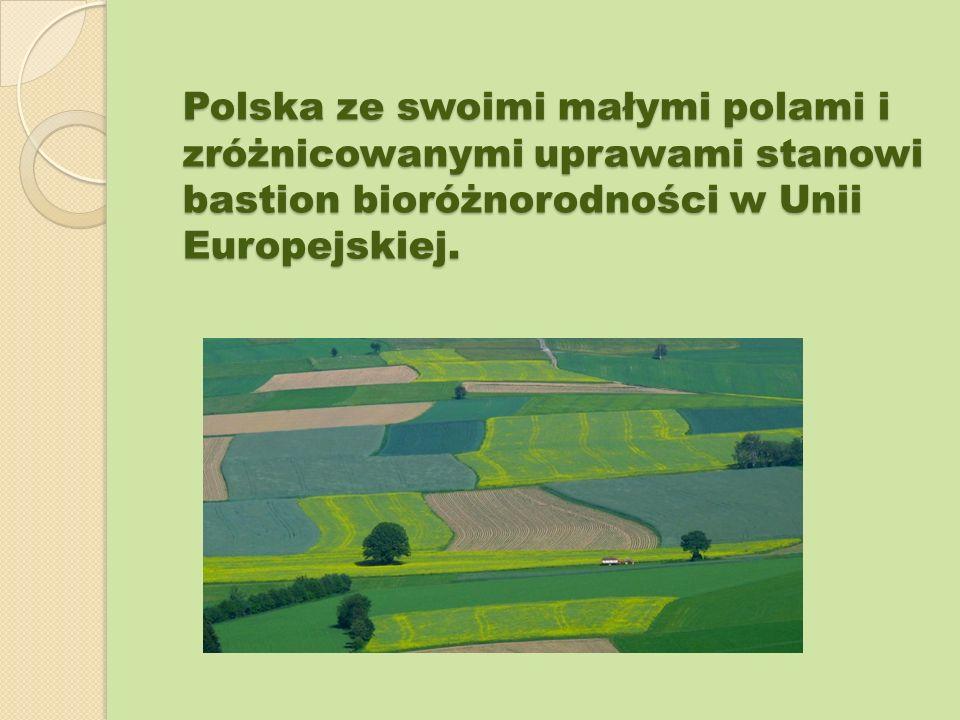 Polska ze swoimi małymi polami i zróżnicowanymi uprawami stanowi bastion bioróżnorodności w Unii Europejskiej.