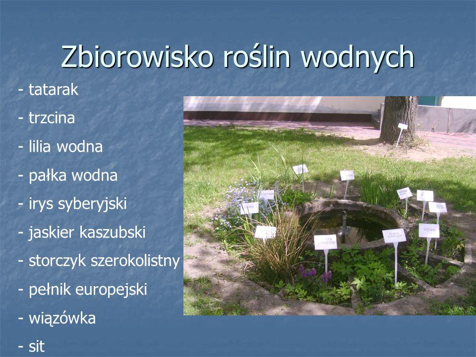 - tatarak - trzcina - lilia wodna - pałka wodna - irys syberyjski - jaskier kaszubski - storczyk szerokolistny - pełnik europejski - wiązówka - sit Zbiorowisko roślin wodnych