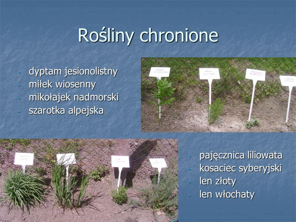 Rośliny chronione - dyptam jesionolistny - miłek wiosenny - mikołajek nadmorski - szarotka alpejska - pajęcznica liliowata - kosaciec syberyjski - len złoty - len włochaty