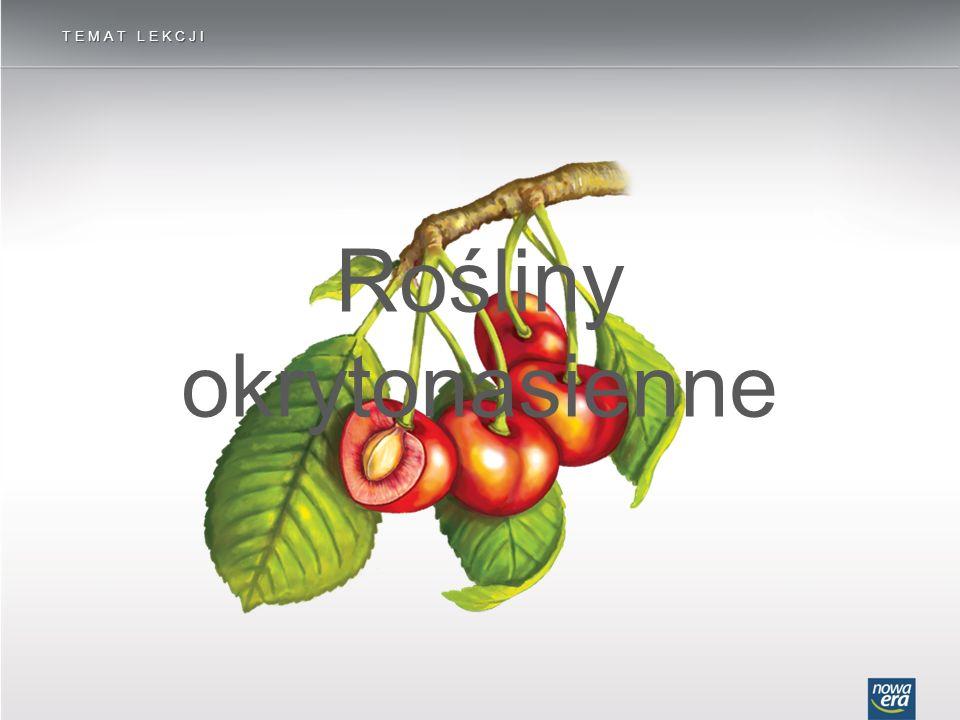 Sposoby rozsiewania nasion – przez zwierzęta ROŚLINY OKRYTONASIENNE Owoce przenoszone na powierzchni ciała zwierząt mają haczykowate wyrostki, jak u łopianu, aby łatwo mogły się przyczepiać do piór lub sierści.