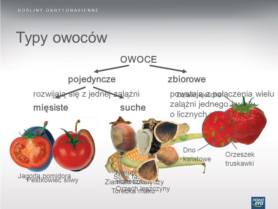 Typy owoców ROŚLINY OKRYTONASIENNE OWOCE pojedynczezbiorowe suchemięsiste rozwijają się z jednej zalążnipowstają z połączenia wielu zalążni jednego kw