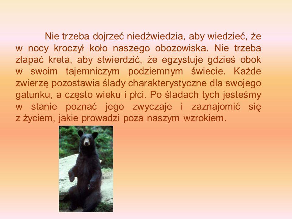 Nie trzeba dojrzeć niedźwiedzia, aby wiedzieć, że w nocy kroczył koło naszego obozowiska. Nie trzeba złapać kreta, aby stwierdzić, że egzystuje gdzieś