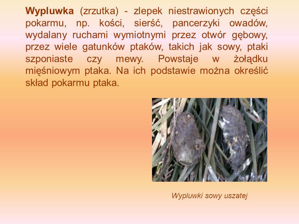 Wypluwka (zrzutka) - zlepek niestrawionych części pokarmu, np. kości, sierść, pancerzyki owadów, wydalany ruchami wymiotnymi przez otwór gębowy, przez