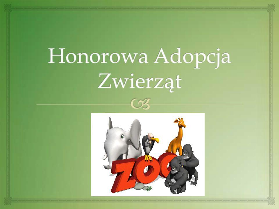 Uwrażliwienie na potrzeby zwierząt Cele adopcji