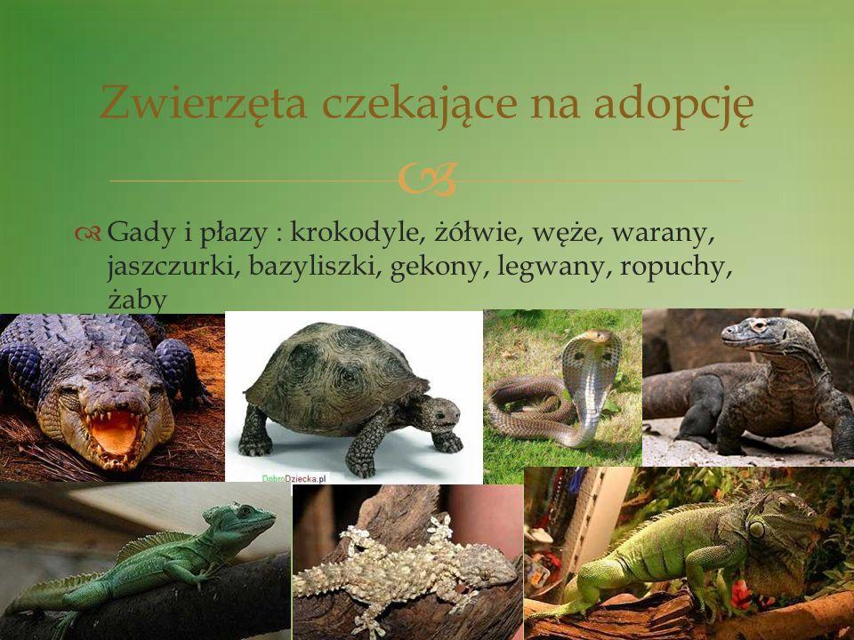Gady i płazy : krokodyle, żółwie, węże, warany, jaszczurki, bazyliszki, gekony, legwany, ropuchy, żaby Zwierzęta czekające na adopcję