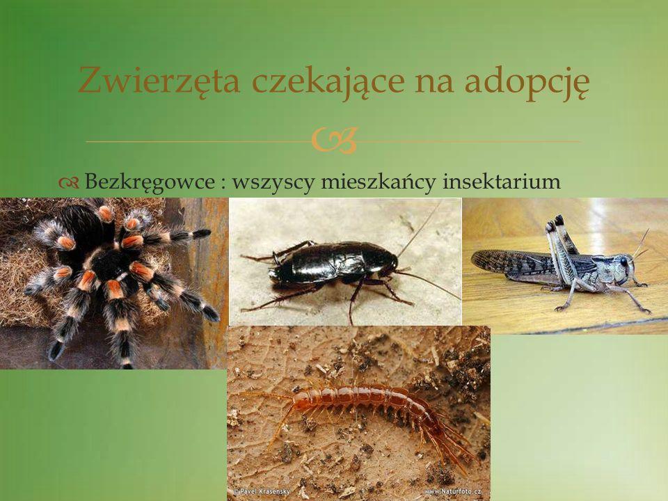 Bezkręgowce : wszyscy mieszkańcy insektarium Zwierzęta czekające na adopcję