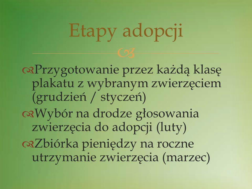 Przygotowanie przez każdą klasę plakatu z wybranym zwierzęciem (grudzień / styczeń) Wybór na drodze głosowania zwierzęcia do adopcji (luty) Zbiórka pi