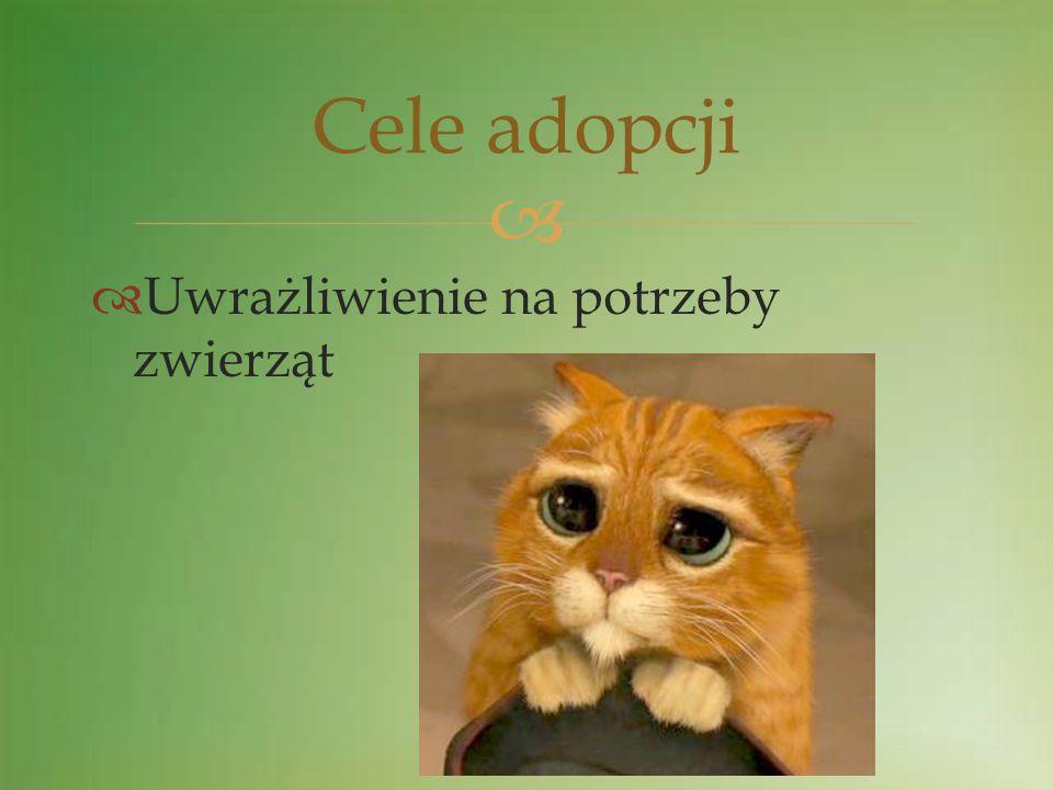 Przygotowanie przez każdą klasę plakatu z wybranym zwierzęciem (grudzień / styczeń) Wybór na drodze głosowania zwierzęcia do adopcji (luty) Zbiórka pieniędzy na roczne utrzymanie zwierzęcia (marzec) Etapy adopcji
