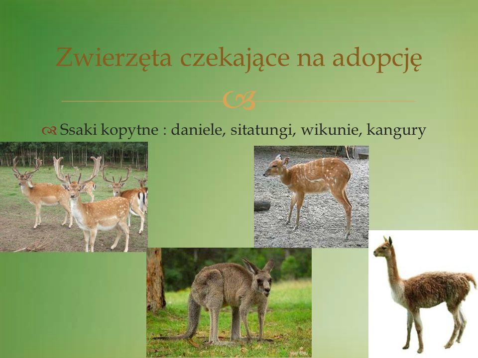 Ssaki kopytne : daniele, sitatungi, wikunie, kangury Zwierzęta czekające na adopcję