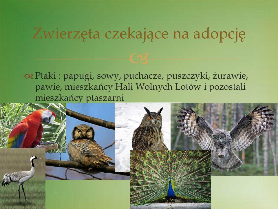 Ptaki : papugi, sowy, puchacze, puszczyki, żurawie, pawie, mieszkańcy Hali Wolnych Lotów i pozostali mieszkańcy ptaszarni Zwierzęta czekające na adopc