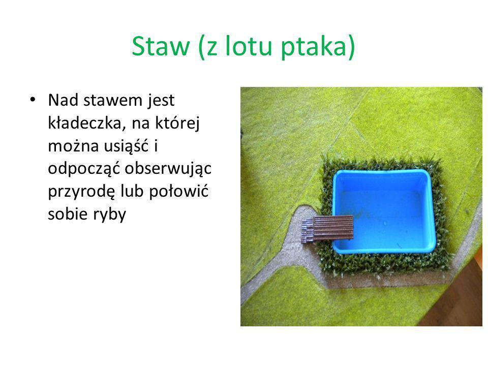 Staw (z lotu ptaka) Nad stawem jest kładeczka, na której można usiąść i odpocząć obserwując przyrodę lub połowić sobie ryby