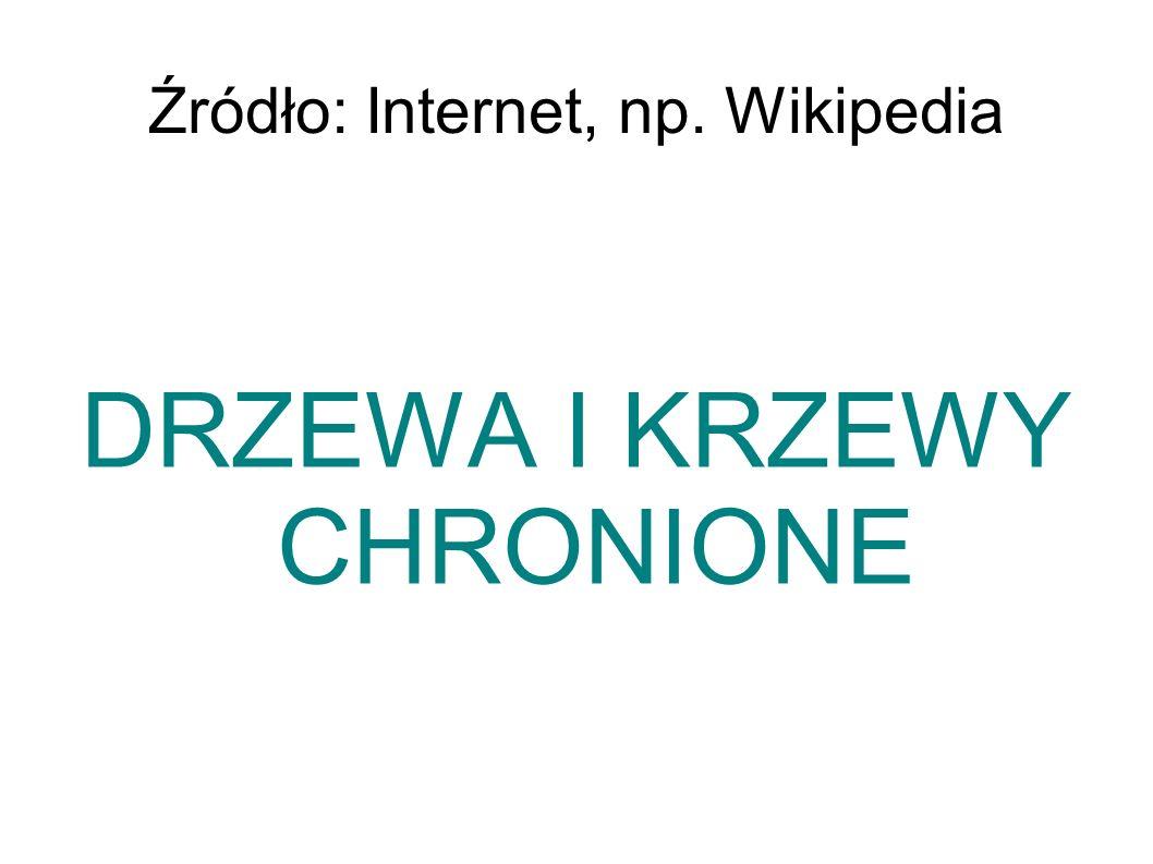 Źródło: Internet, np. Wikipedia DRZEWA I KRZEWY CHRONIONE