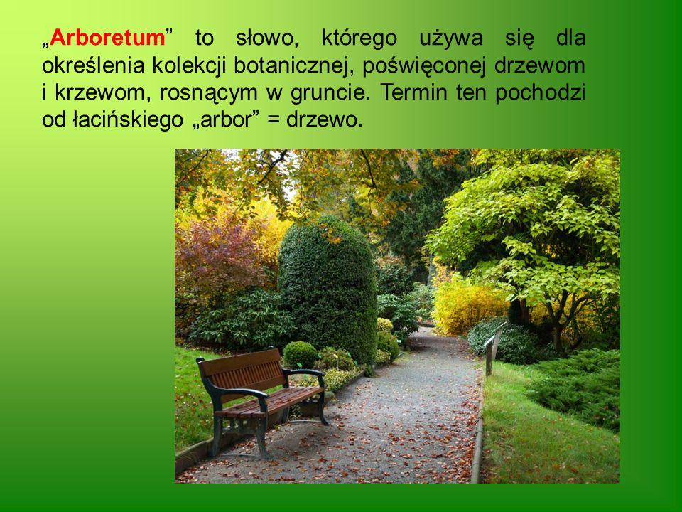 Arboretum to słowo, którego używa się dla określenia kolekcji botanicznej, poświęconej drzewom i krzewom, rosnącym w gruncie. Termin ten pochodzi od ł