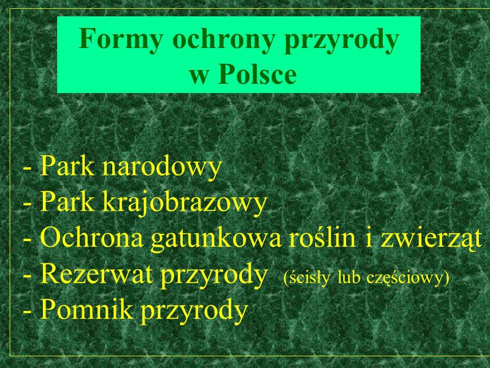 - Park narodowy - Park krajobrazowy - Ochrona gatunkowa roślin i zwierząt - Rezerwat przyrody (ścisły lub częściowy) - Pomnik przyrody Formy ochrony przyrody w Polsce