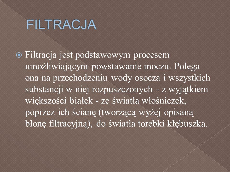Filtracja jest podstawowym procesem umożliwiającym powstawanie moczu. Polega ona na przechodzeniu wody osocza i wszystkich substancji w niej rozpuszcz