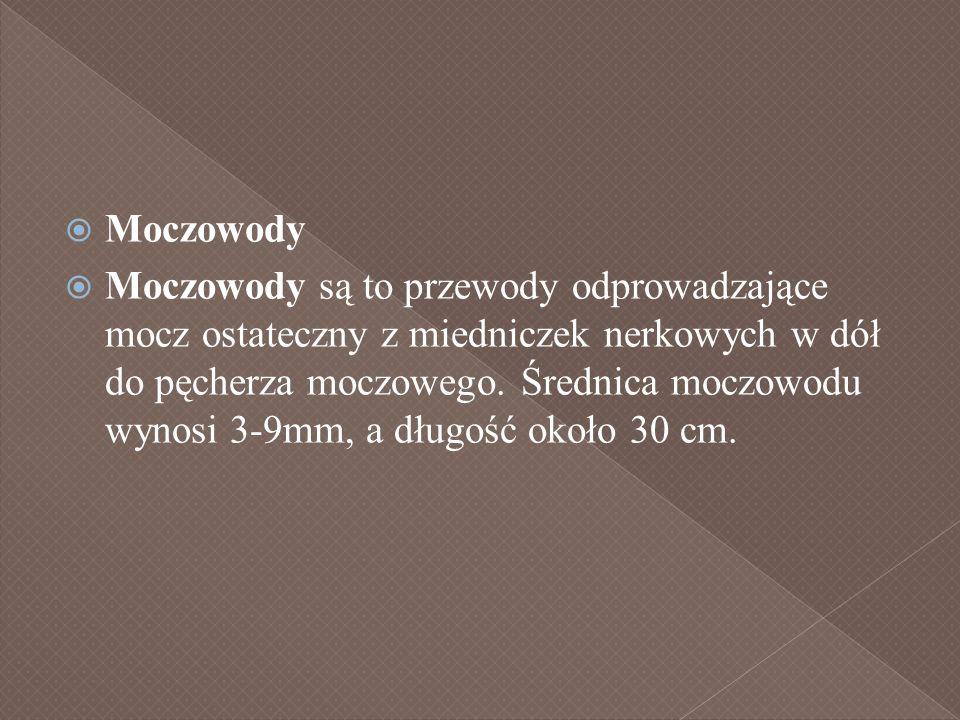 Moczowody Moczowody są to przewody odprowadzające mocz ostateczny z miedniczek nerkowych w dół do pęcherza moczowego. Średnica moczowodu wynosi 3-9mm,