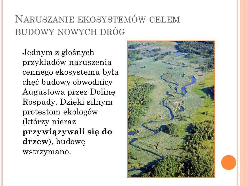 N ARUSZANIE EKOSYSTEMÓW CELEM BUDOWY NOWYCH DRÓG Jednym z głośnych przykładów naruszenia cennego ekosystemu była chęć budowy obwodnicy Augustowa przez