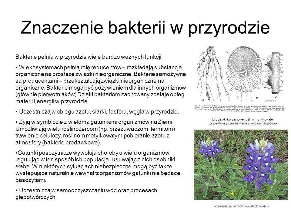 Znaczenie bakterii w przyrodzie Bakterie pełnią w przyrodzie wiele bardzo ważnych funkcji. W ekosystemach pełnią rolę reducentów – rozkładają substanc