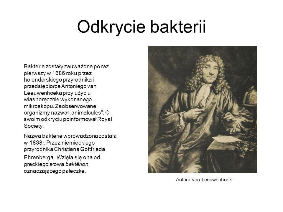 Odkrycie bakterii Bakterie zostały zauważone po raz pierwszy w 1686 roku przez holenderskiego przyrodnika i przedsiębiorcę Antoniego van Leeuwenhoeka