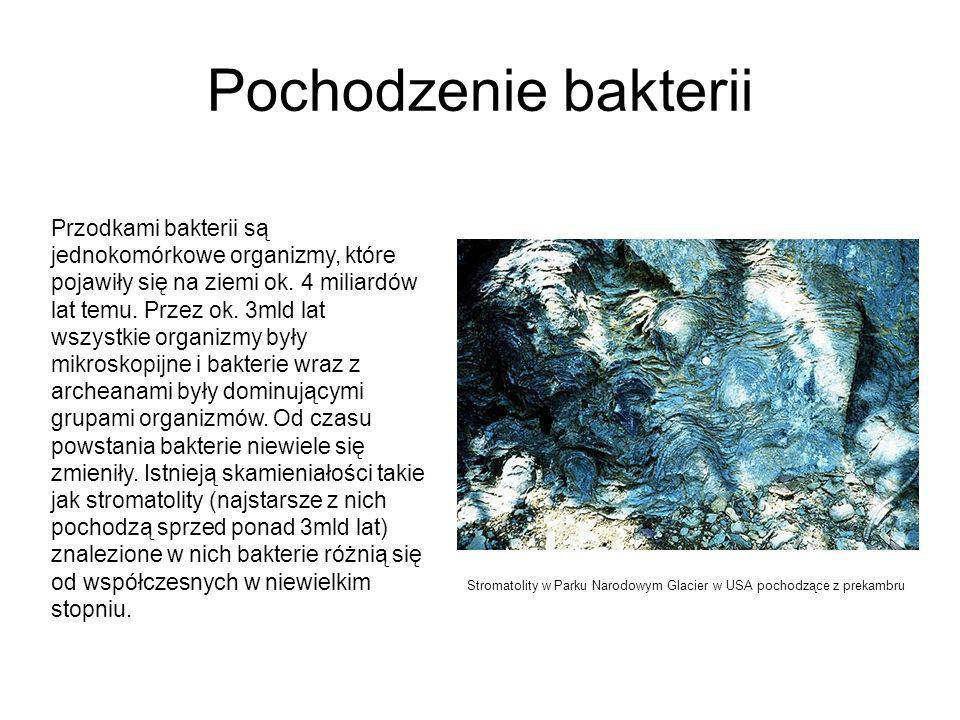 Pochodzenie bakterii Przodkami bakterii są jednokomórkowe organizmy, które pojawiły się na ziemi ok.