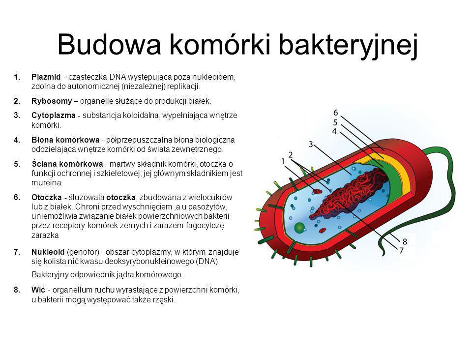 Budowa komórki bakteryjnej 1.Plazmid - cząsteczka DNA występująca poza nukleoidem, zdolna do autonomicznej (niezależnej) replikacji. 2.Rybosomy – orga