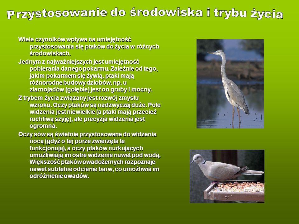 Wiele czynników wpływa na umiejętność przystosowania się ptaków do życia w różnych środowiskach. Jednym z najważniejszych jest umiejętność pobierania