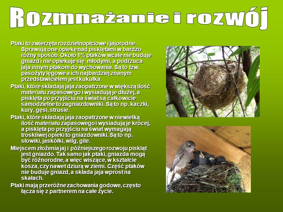 Ptaki to zwierzęta rozdzielnopłciowe i jajorodne. Sprawują one opiekę nad pisklętami w bardzo różny sposób. Około 1% ptaków wcale nie buduje gniazd i