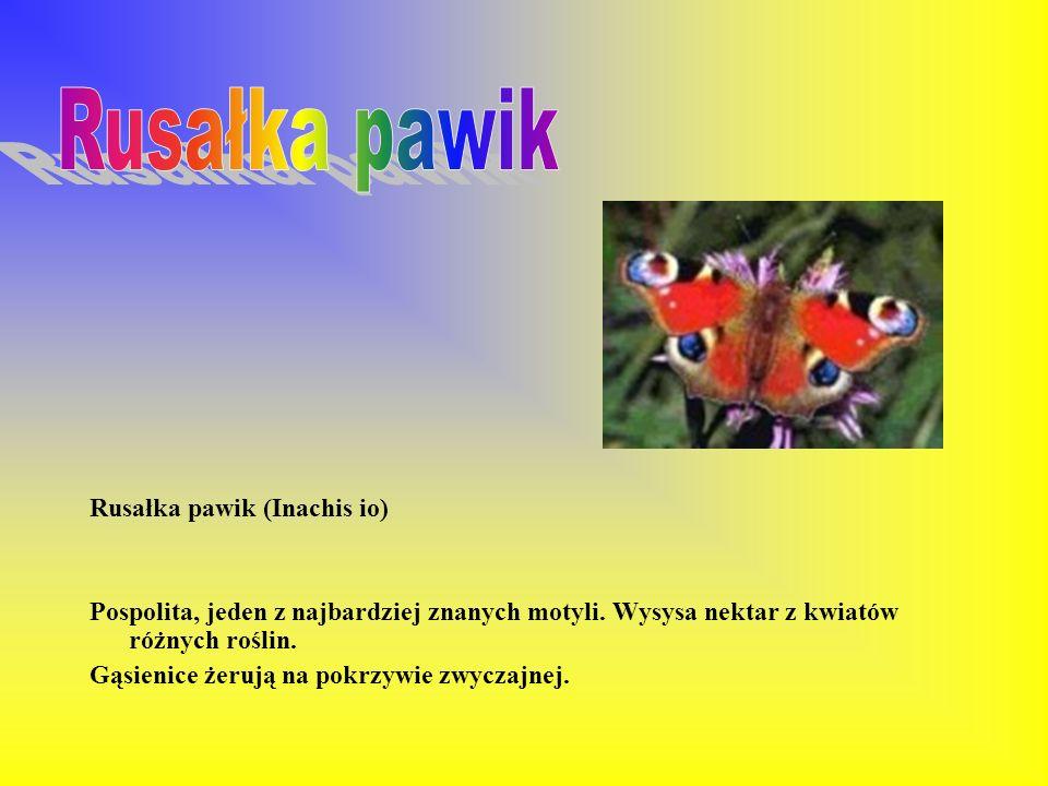 Plamiec leśniak (Calospilos sylvatus) Występuje głównie w wilgotnych lasach. Gąsienice żerują na różnych liściastych krzewach i drzewach