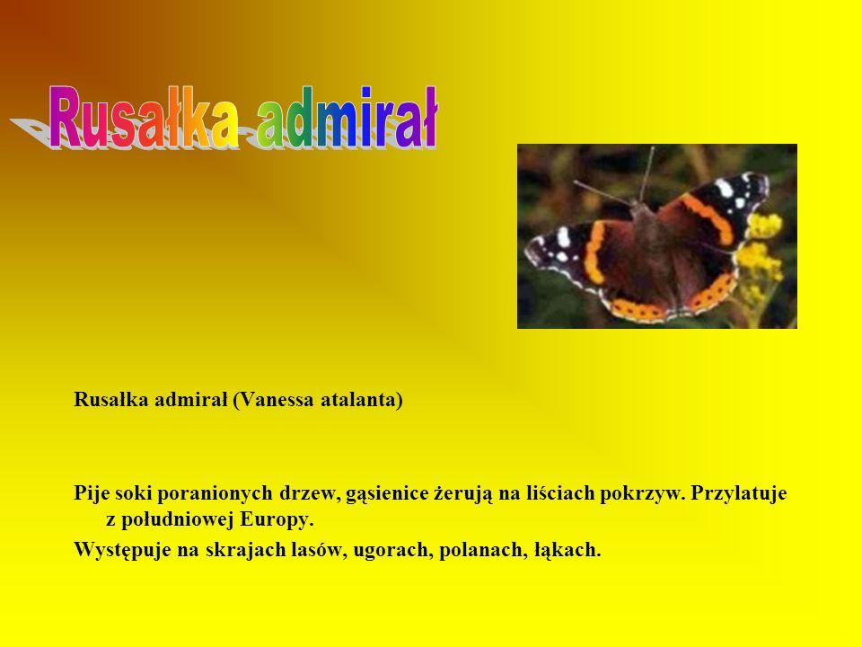 Rusałka pawik (Inachis io) Pospolita, jeden z najbardziej znanych motyli. Wysysa nektar z kwiatów różnych roślin. Gąsienice żerują na pokrzywie zwycza