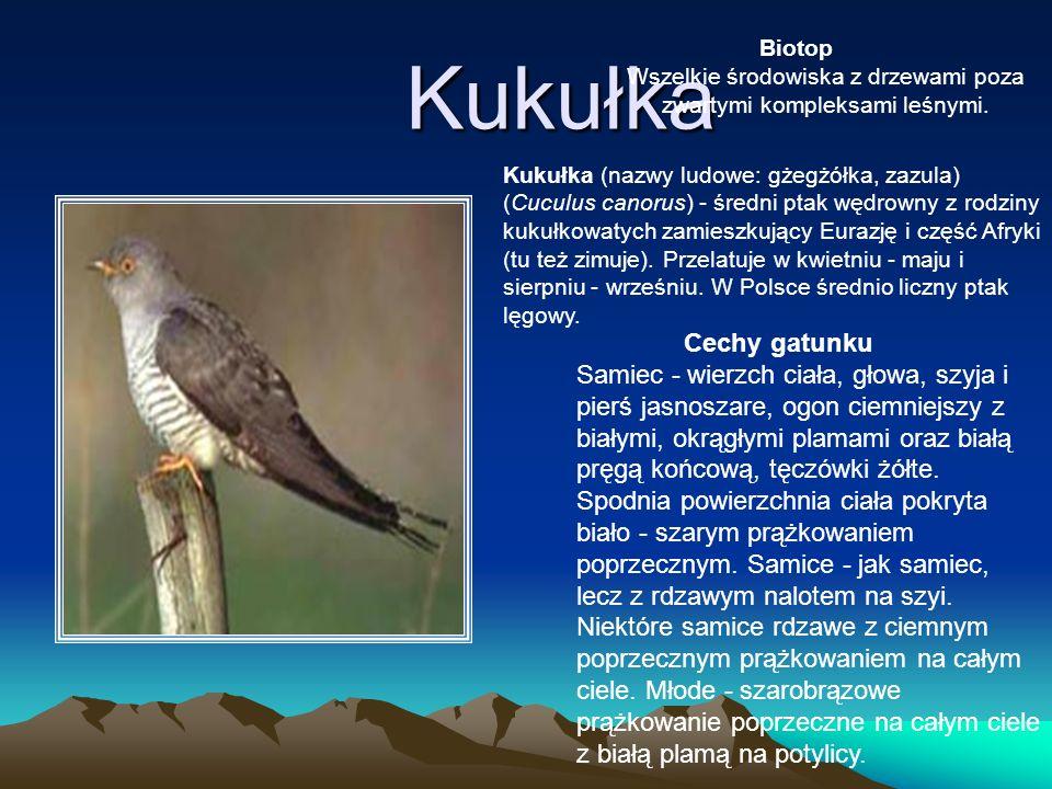 Kukułka Kukułka (nazwy ludowe: gżegżółka, zazula) (Cuculus canorus) - średni ptak wędrowny z rodziny kukułkowatych zamieszkujący Eurazję i część Afryk