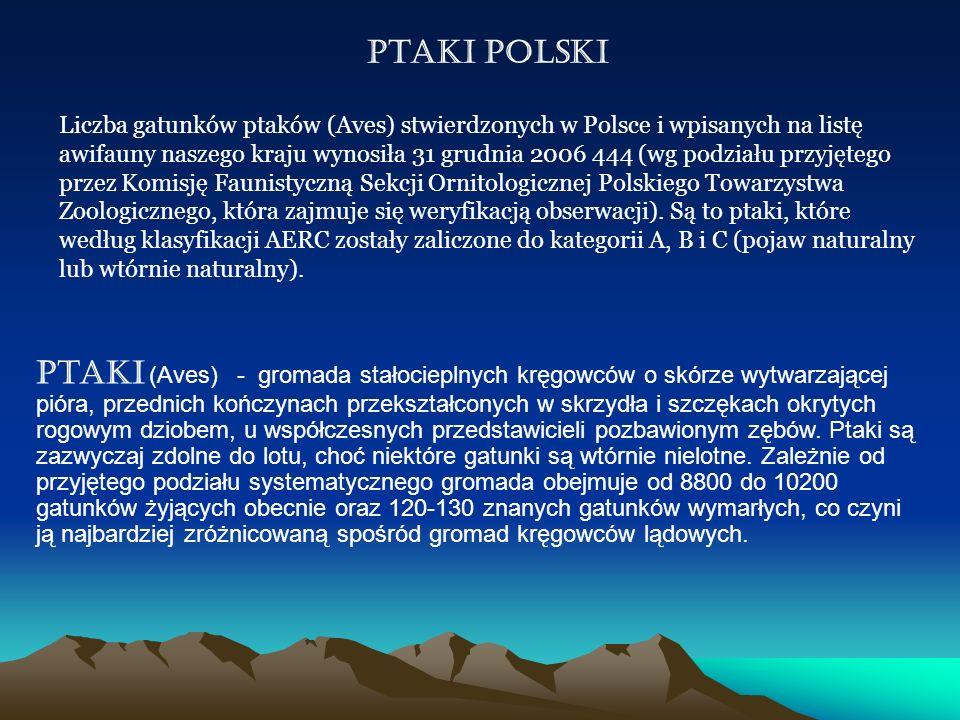 Ptaki Polski Liczba gatunków ptaków (Aves) stwierdzonych w Polsce i wpisanych na listę awifauny naszego kraju wynosiła 31 grudnia 2006 444 (wg podział