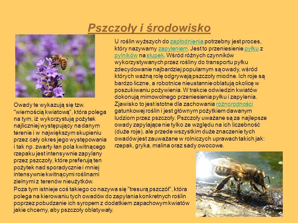Pszczoły i środowisko U roślin wyższych do zapłodnienia potrzebny jest proces, który nazywamy zapyleniem. Jest to przeniesienie pyłku z pylników na sł