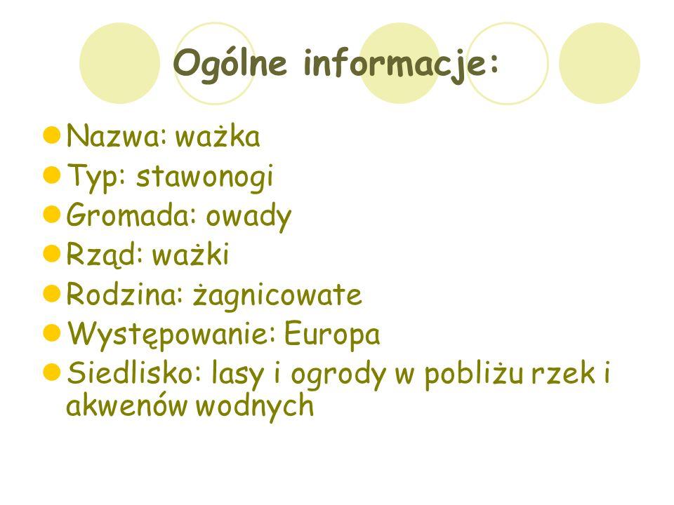 Ogólne informacje: Nazwa: ważka Typ: stawonogi Gromada: owady Rząd: ważki Rodzina: żagnicowate Występowanie: Europa Siedlisko: lasy i ogrody w pobliżu