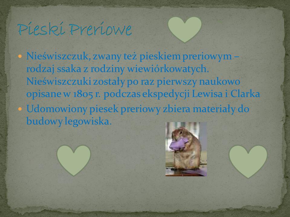 Autorki: Ewa Komar Natalia Podsendek