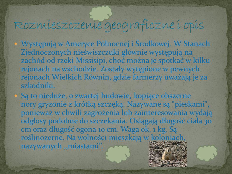 Nieświszczuk, zwany też pieskiem preriowym – rodzaj ssaka z rodziny wiewiórkowatych. Nieświszczuki zostały po raz pierwszy naukowo opisane w 1805 r. p
