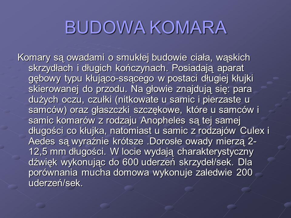BUDOWA KOMARA Komary są owadami o smukłej budowie ciała, wąskich skrzydłach i długich kończynach.