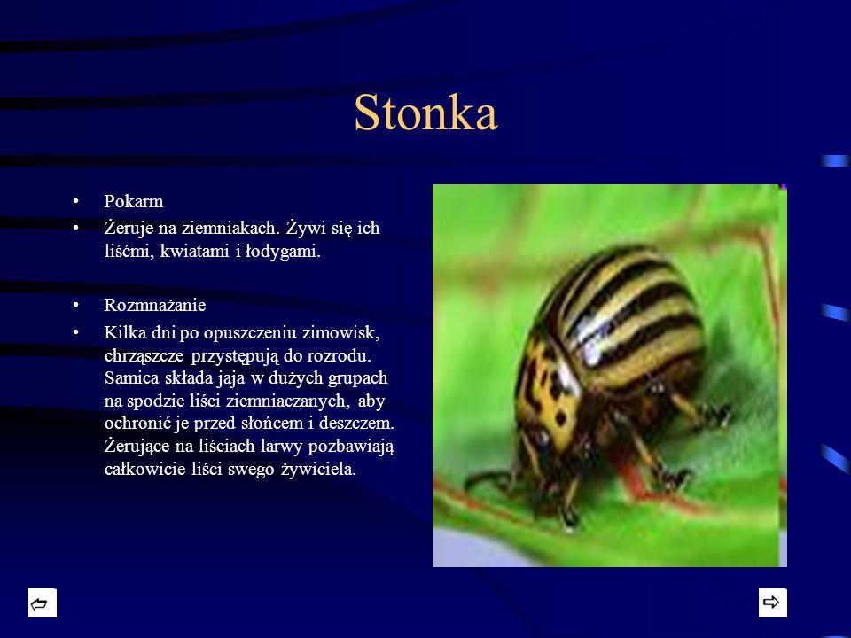 Osa Rodzaj owadów charakteryzujący się kontrastowym ubarwieniem, zazwyczaj żółto-czarnym, oraz posiadaniem żądła stanowiącego naturalną broń w razie zagrożenia.