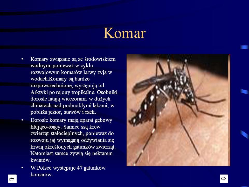Komar Komary związane są ze środowiskiem wodnym, ponieważ w cyklu rozwojowym komarów larwy żyją w wodach.Komary są bardzo rozpowszechnione, występują