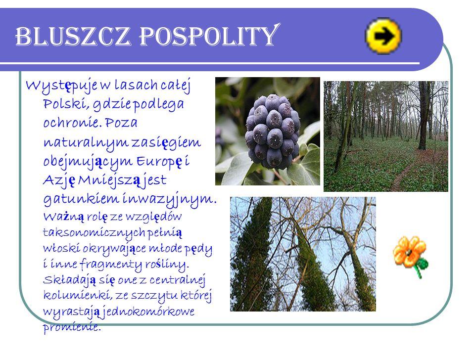 Bluszcz pospolity Wyst ę puje w lasach całej Polski, gdzie podlega ochronie.
