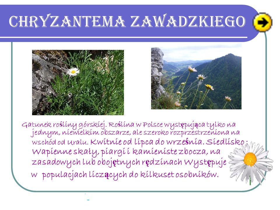 Bluszcz pospolity Wyst ę puje w lasach całej Polski, gdzie podlega ochronie. Poza naturalnym zasi ę giem obejmuj ą cym Europ ę i Azj ę Mniejsz ą jest