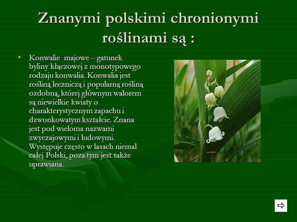 Rośliny chronione -Gatunki chronione w Polsce -Rzadko występujące gatunki chronione. -Najczęstsze występowanie gatunków chronionych Autor : Anita Leśn
