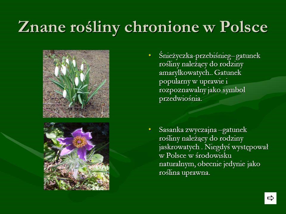 Znanymi polskimi chronionymi roślinami są : Konwalie majowe – gatunek byliny kłączowej z monotypowego rodzaju konwalia. Konwalia jest rośliną lecznicz