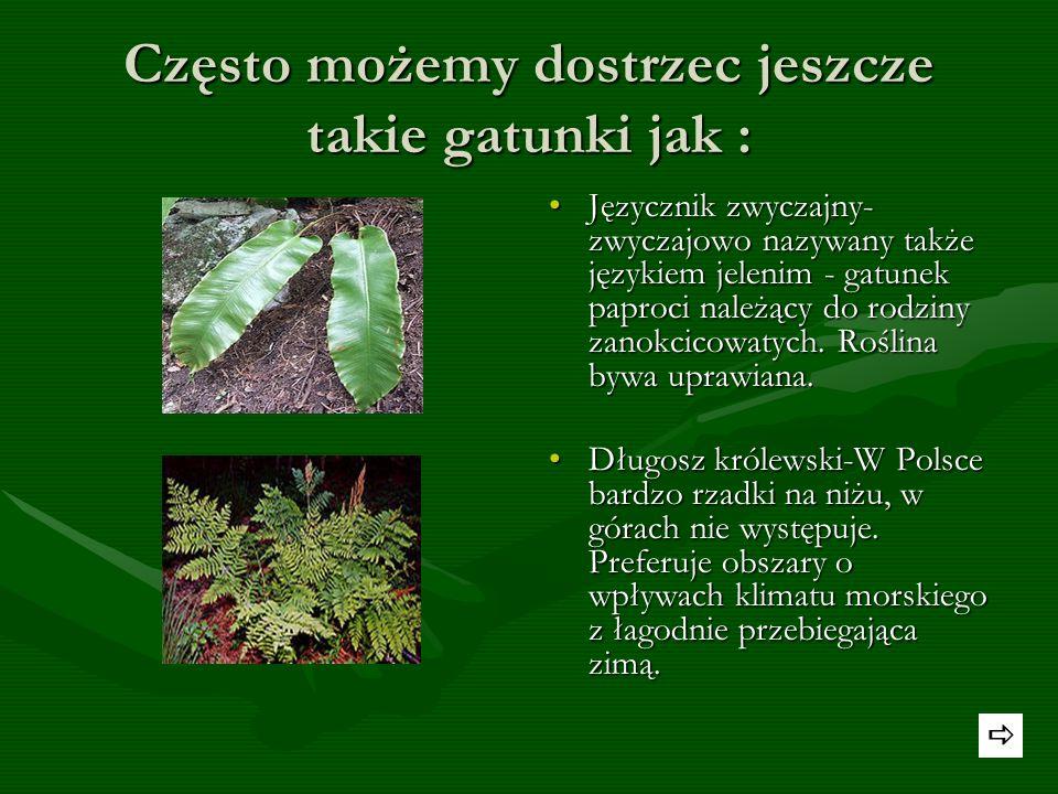 Znane rośliny chronione w Polsce Śnieżyczka-przebiśnieg– gatunek rośliny należący do rodziny amarylkowatych.. Gatunek popularny w uprawie i rozpoznawa
